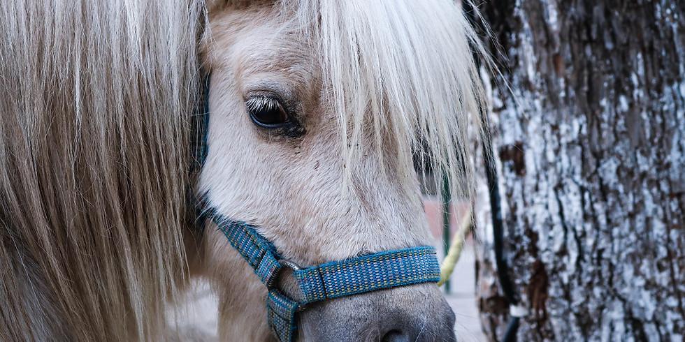Ponys auf der Piazza Catrina