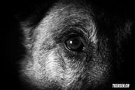 Hundefotografie, Tierfotogrfie