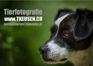 Hundefotografie, Tierfotografie