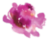 JTay Flower.png