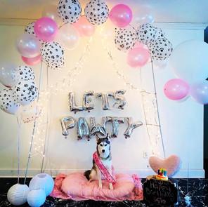Puppy pawty birthday photoshoot backdrop