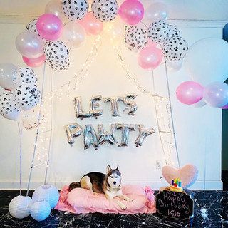 Puppy pawty birthday photoshoot backdrop