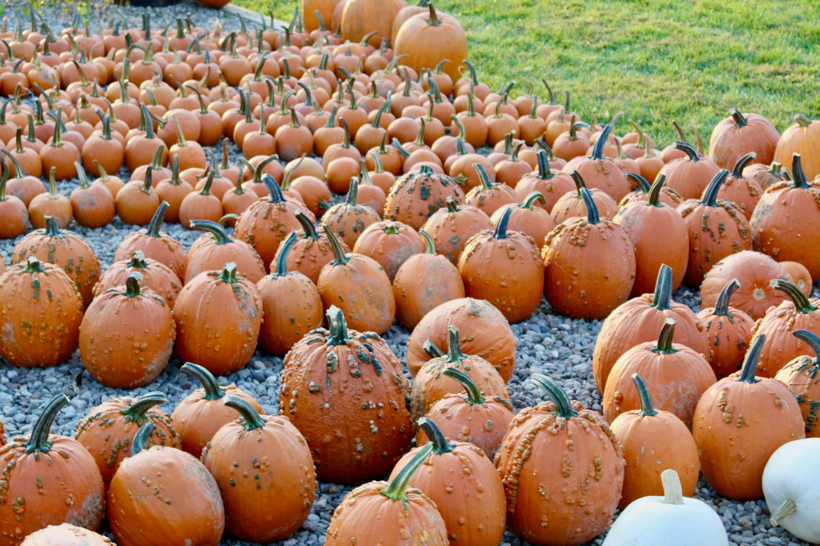 Fall Farm Foods - Pumpkin Row 2.jpeg