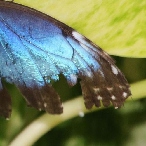 Aruba - 305.jpg