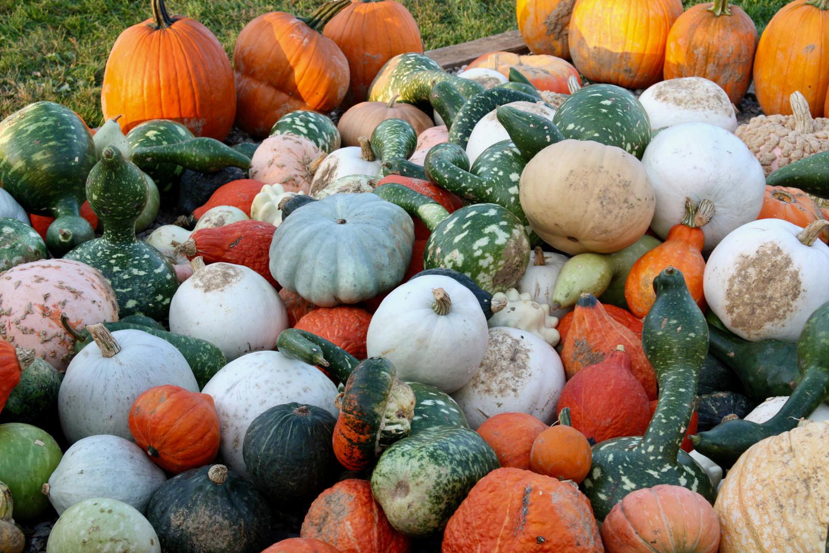 Fall Farm Foods - Squash.jpeg