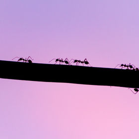 abstract of ants family walking on the e