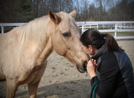 What if your therapist is a horse?