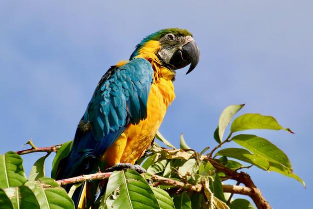 Aruba Animals - 2.jpeg
