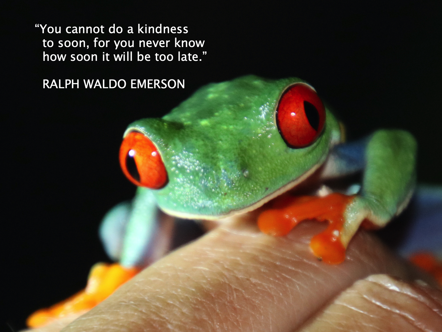 Kindness Quote 7.jpg