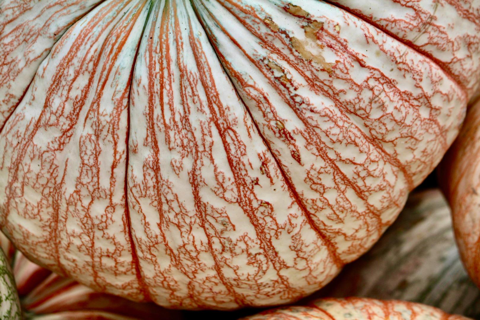 Fall Farm Foods - Orange Squash.jpeg