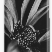 B&W Flower Phone Case