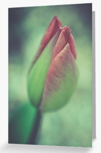 Tulip Greetings Card
