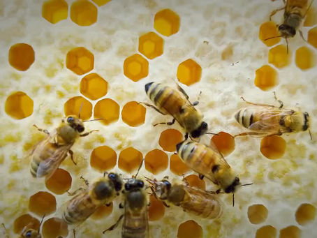 Remembering the warmer months of beekeeping