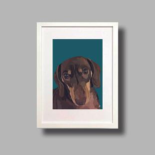 Dacshund Dog