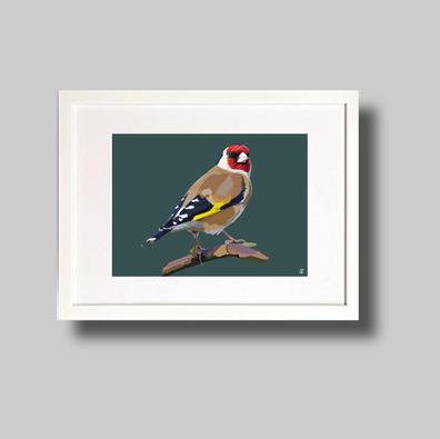 English Goldfinch.