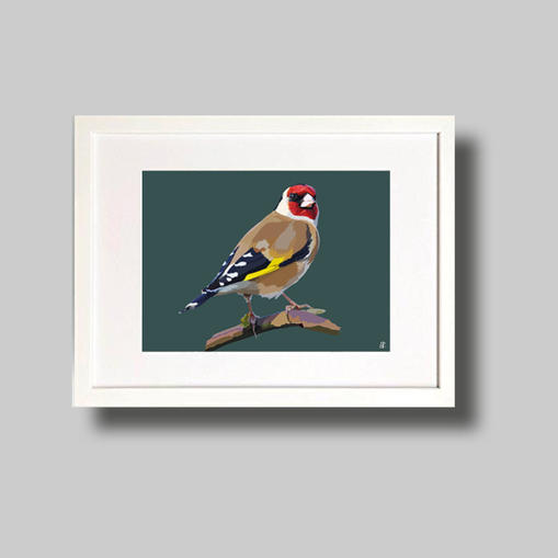 English Goldfinch.