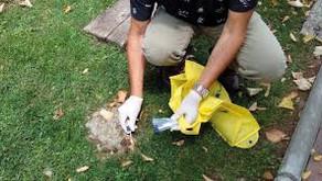 Det lokale politi i Benalmádena begynder at  identificere afføring fra hunde via DNA