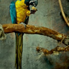 On ne quitte pas son poste inopinément pour rattraper son perroquet en se prétendant en délégation
