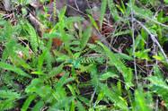 plantes 2.jpg
