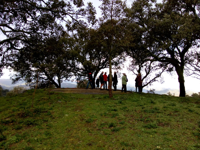 People standing in cork oaks