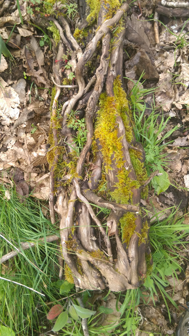 Bark, wood on ground