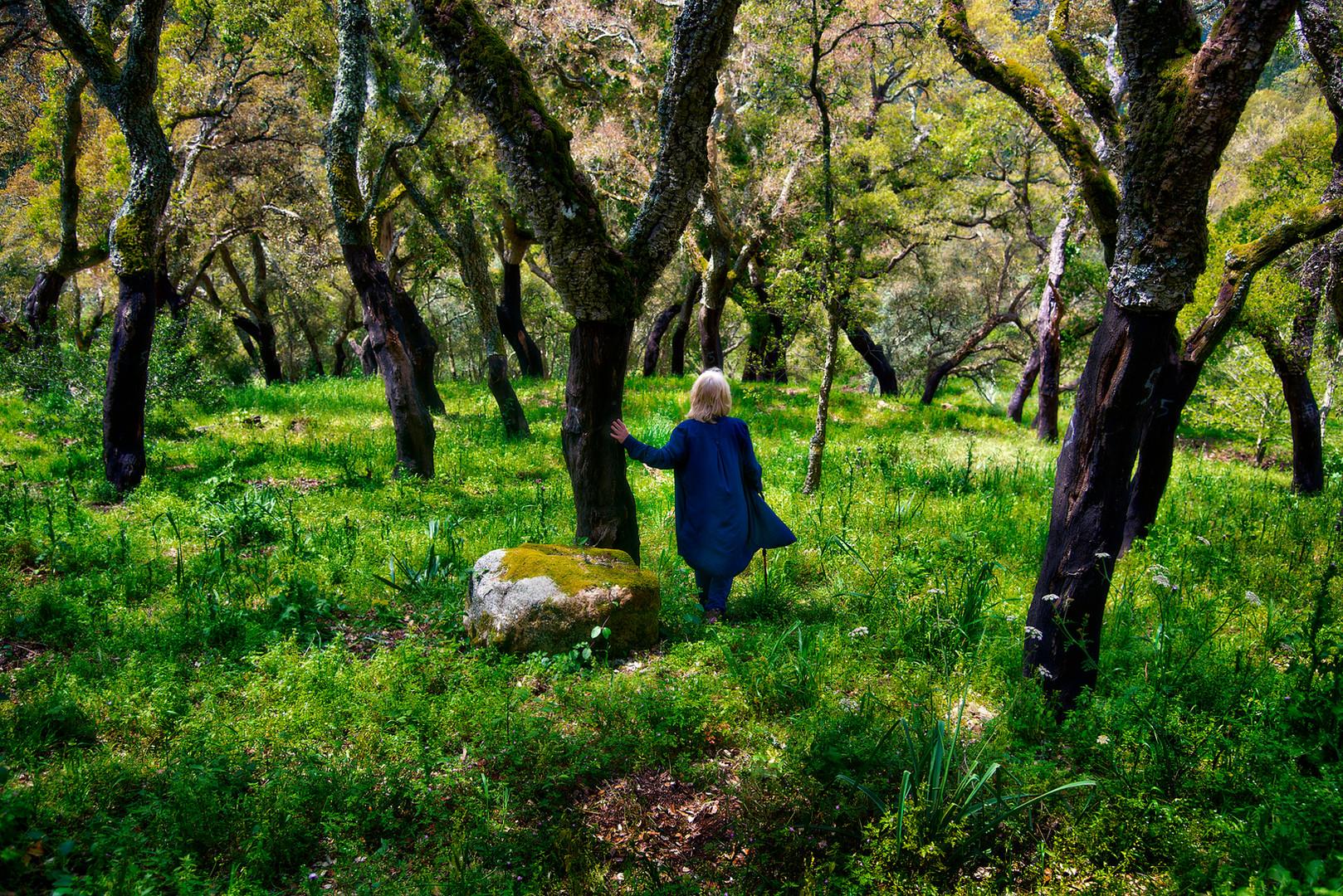 Walking in cork oaks
