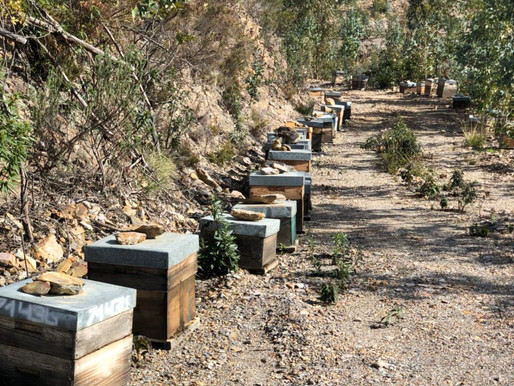 Beekeeper Story, After the Fires