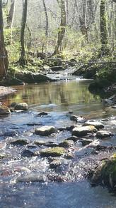 Atelier près du ruisseau