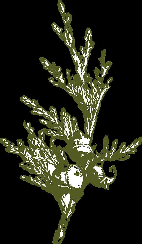 fond arbre.png