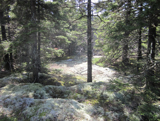 TOWN OF CAMDEN DONATES 63+ ACRES IN SUPPORT OF ROUND THE MOUNTAIN COLLABORATION