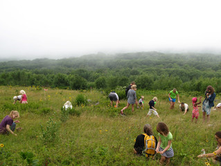 Land Trust Offers FREE Blueberry Pick at Beech Hill Preserve!