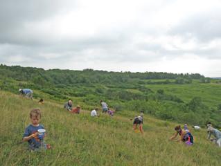 FREE Blueberry Picks at Beech Hill Preserve!