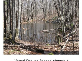 CMLT is Searching for Vernal Pools