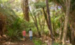 Aio-Wira-bush-walk-2.jpg