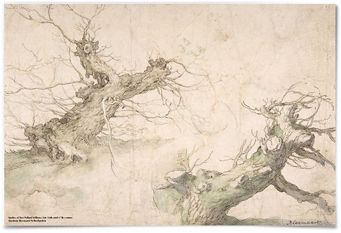 "Studies of Two Pollard Willows, 16th Century - Abraham Bloemaert - 24x36"" Poster"