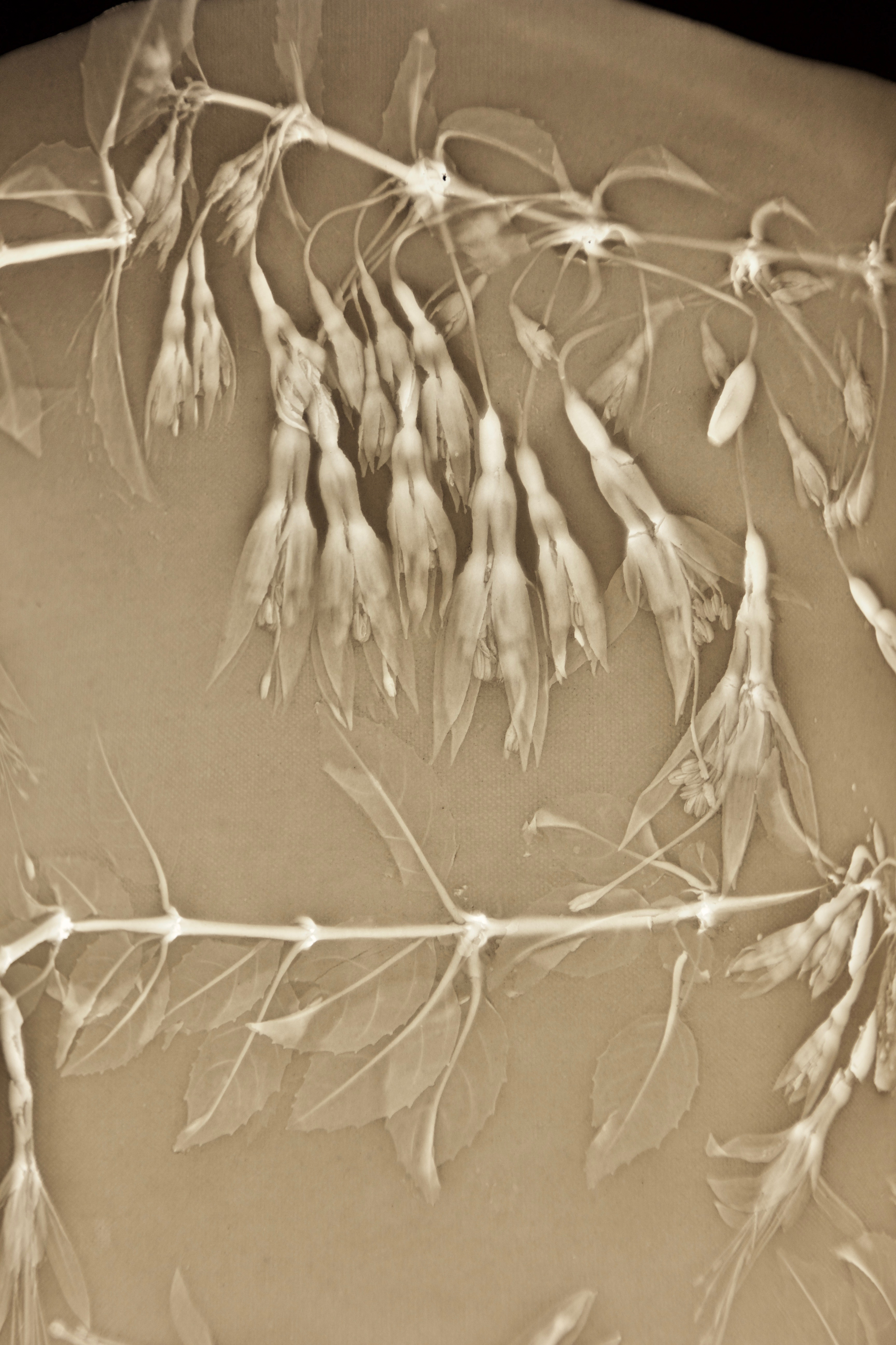 Fuchsia detail