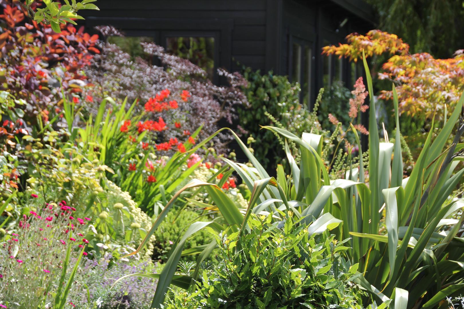 Chrissy's garden