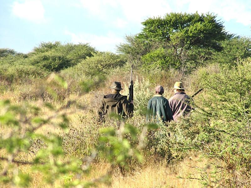 Jagd--jagdfarm-namibia-kashjuna-hunting-