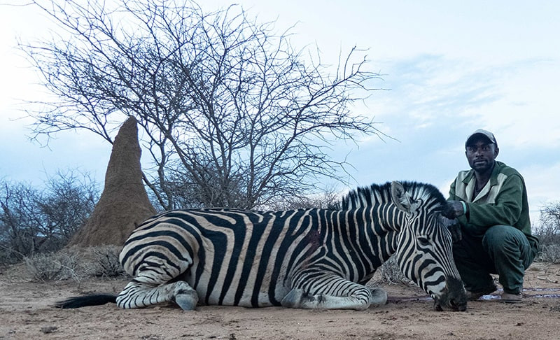 zebra-min.jpg
