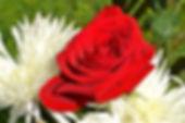 flower-3287770_1920.jpg