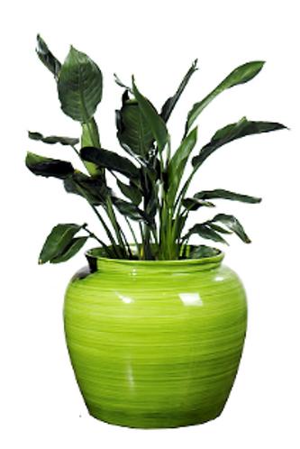 Planter Sire 1003