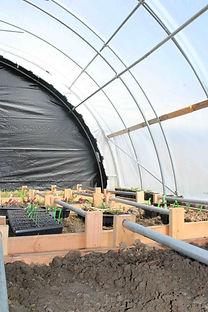 plants+growing+inside+auto+light+dep+hoop+house.jpg