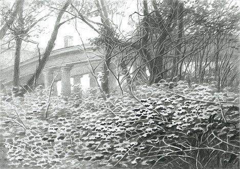 Первый снег. Усадьба Пехра-Яковлевское