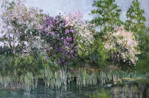 Сирень и вишни у пруда