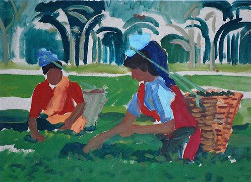 Чайные плантации. Шри-Ланка