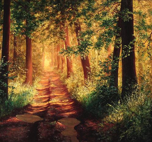 Лес наполненный солнцем
