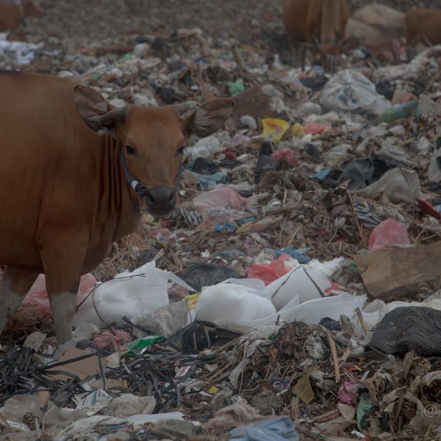 Bali - Dump -23.jpg