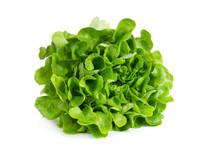 Green oakleaf