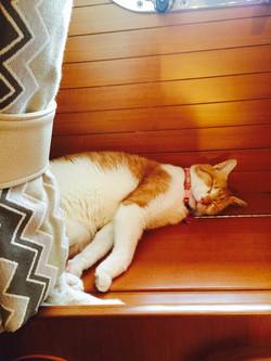 One of her favorite sleeping spots