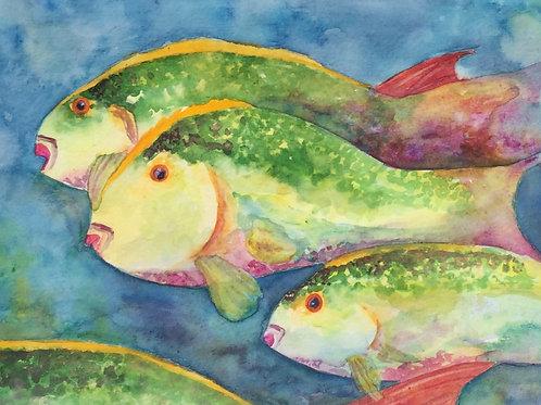 Parrot Fish of Key West